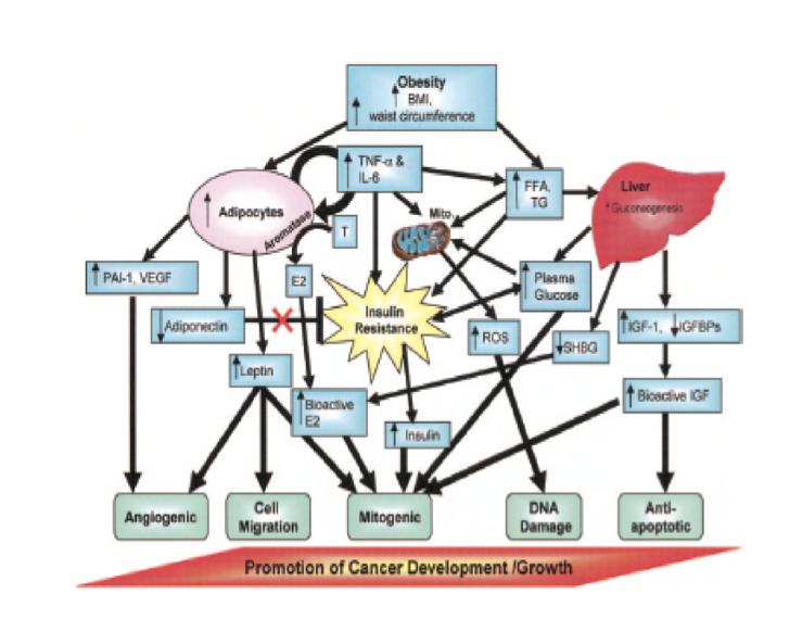 Cancro-e-obesità-una-prevenzione-che-vale-doppio